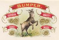 Bumper Fine Art Print