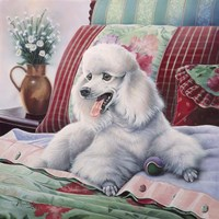 White Poodle Fine Art Print