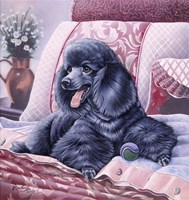 Black Poodle Fine Art Print