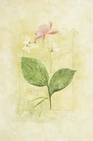 Pink Bloom 1 Framed Print