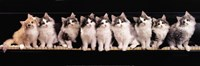 Klassical Kittens Fine Art Print