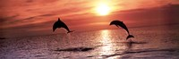 Sunset Dolphins Fine Art Print