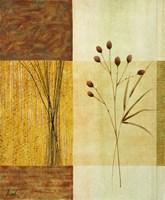 Wheat II Fine Art Print