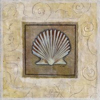 Sea Shell I Framed Print