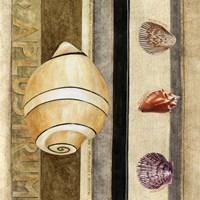 Shell Collage I Framed Print