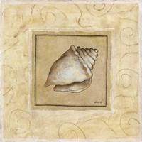Conch Shell Framed Print