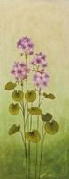 Wild Flowers III Framed Print