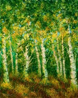Birch Trees Fine Art Print
