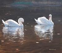 Illustrious Swans Fine Art Print