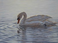 Dribbling Swan Fine Art Print