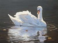 Illuminated Swan Fine Art Print