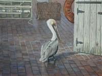 Petes' Pelican Fine Art Print