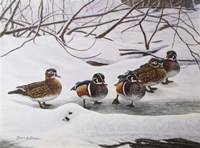 Winter Wood Ducks Fine Art Print