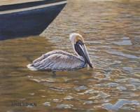 Sparkling Water Pelican Fine Art Print