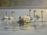Hanover Swans Six Fine Art Print