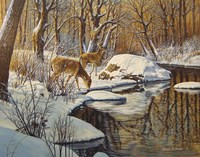 Quinnipiac River White Tails Fine Art Print