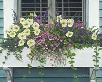 Nantucket Bloom Fine Art Print