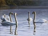 Hanover Swans Five Fine Art Print