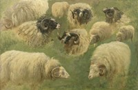 Black-Faced Ram and Sheep, 10 studies Fine Art Print