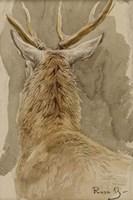 Study of a Deer Fine Art Print