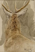 Study of a Deer Fine Art Print