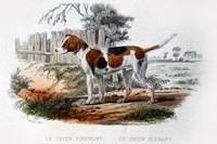 Dog I Fine Art Print