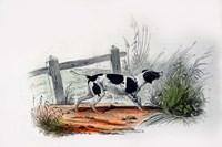 Dog II Fine Art Print