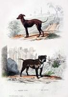 Pair of Dogs II Fine Art Print