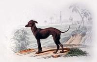 Dog III Fine Art Print