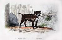 Dog IV Fine Art Print