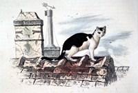 Cat on Roof Top Fine Art Print
