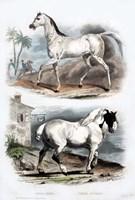 Pair of Horses Fine Art Print