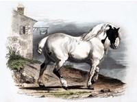 Horse II Fine Art Print