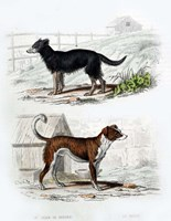 Pair of Dogs IV Fine Art Print