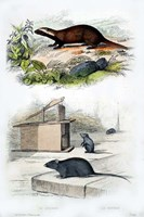 Badger and Mouse Fine Art Print