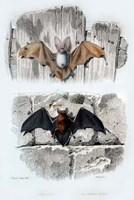 Bats Fine Art Print