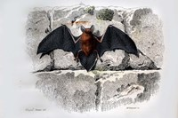 Bat I Fine Art Print