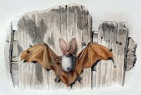 Bat II Fine Art Print