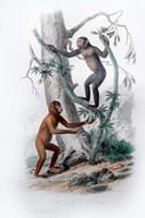 Pair of Monkeys II Fine Art Print
