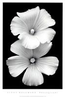Perfect White Fine Art Print