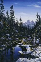Bear Family Fine Art Print