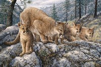 Cat Family Fine Art Print