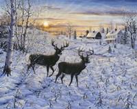 Two Deer In The Moonlight Fine Art Print