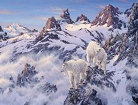 Among The Clouds - Mtn. Goat Fine Art Print