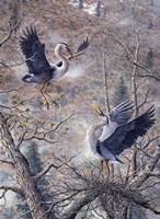 Nesting Time - Great Blue Herons Fine Art Print