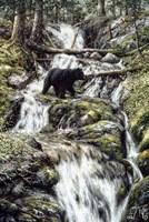 Bear Creek Crossing Fine Art Print