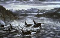Whales Fine Art Print