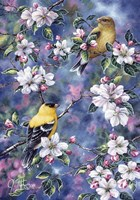 Gold Finch & Blossoms Fine Art Print