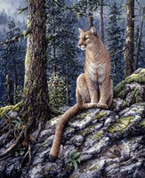 King Of The Forest Fine Art Print