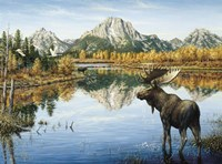 Bull Moose Fine Art Print